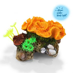 Assorted Coral With Plants – Small
